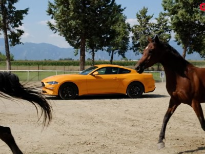 GOCAR TEST - Ford Mustang Fastback 2.3 Ecoboost Auto